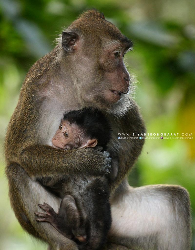 mother and child monkey lake sebu 7 falls