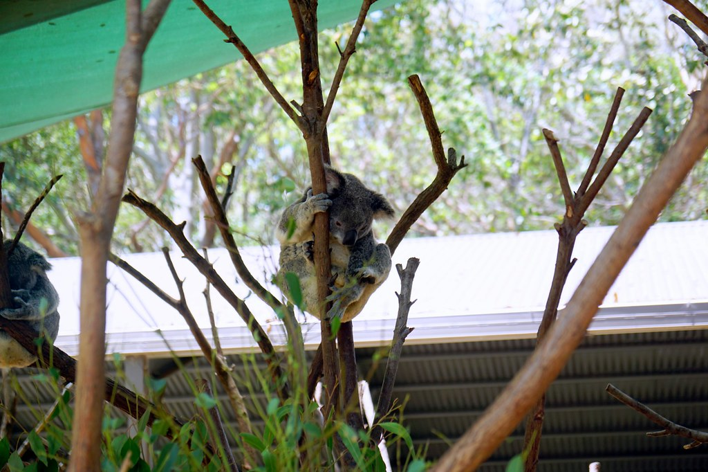 Currumbin Wildlife Sanctuary - trip review-001