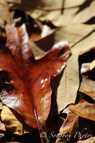 """Fallen Leaves on Jenn's Trail at the Edwin B. Forsythe National Wildlife Refuge"
