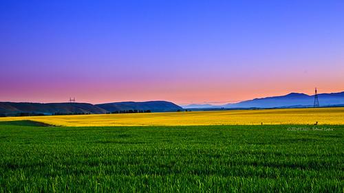 newzealand flower landscape twilight colorful 6d