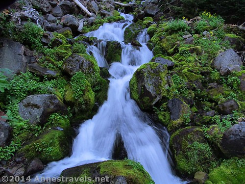 Waterfalls along the Spray Park Trail, Mt. Rainier National Park, Washington