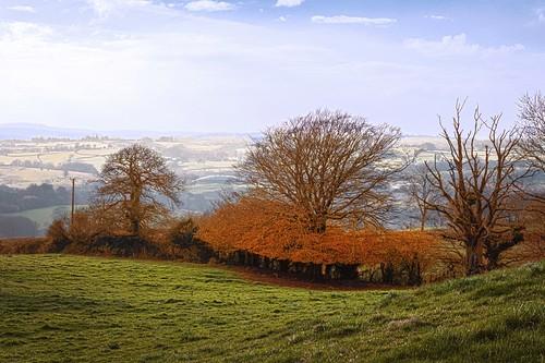 autumn trees wales landscape carmarthenshire