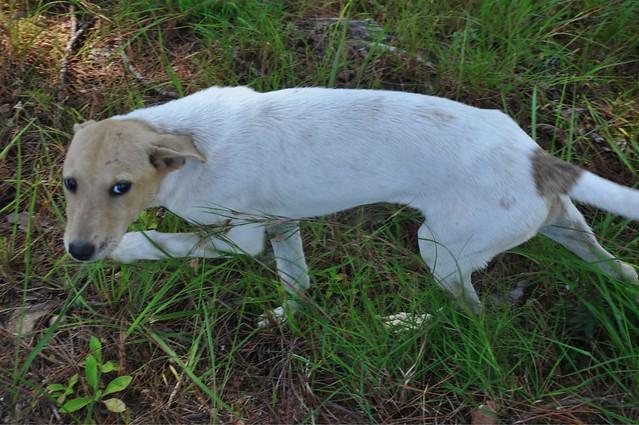 Lammin Dog