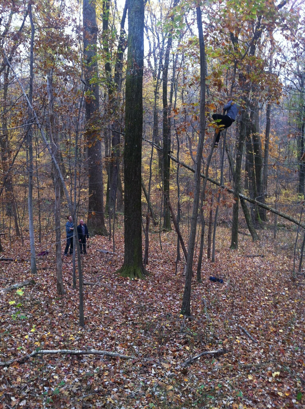 Kevin tree-riding