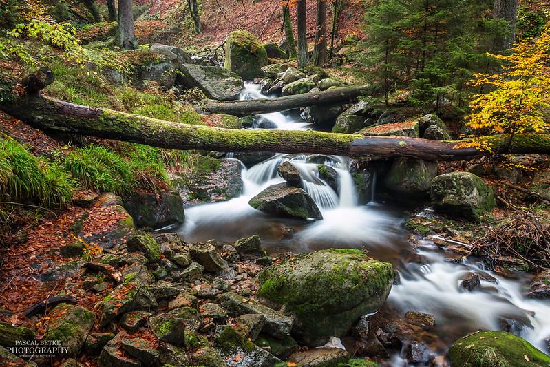 Ilsetal im Harz - Flusslauf
