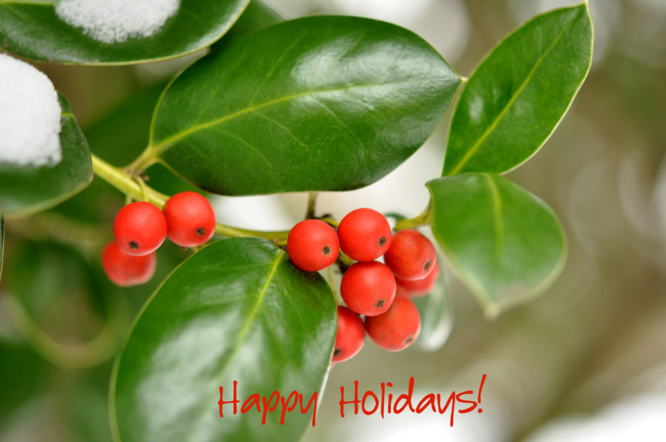 holly_berry_card_web