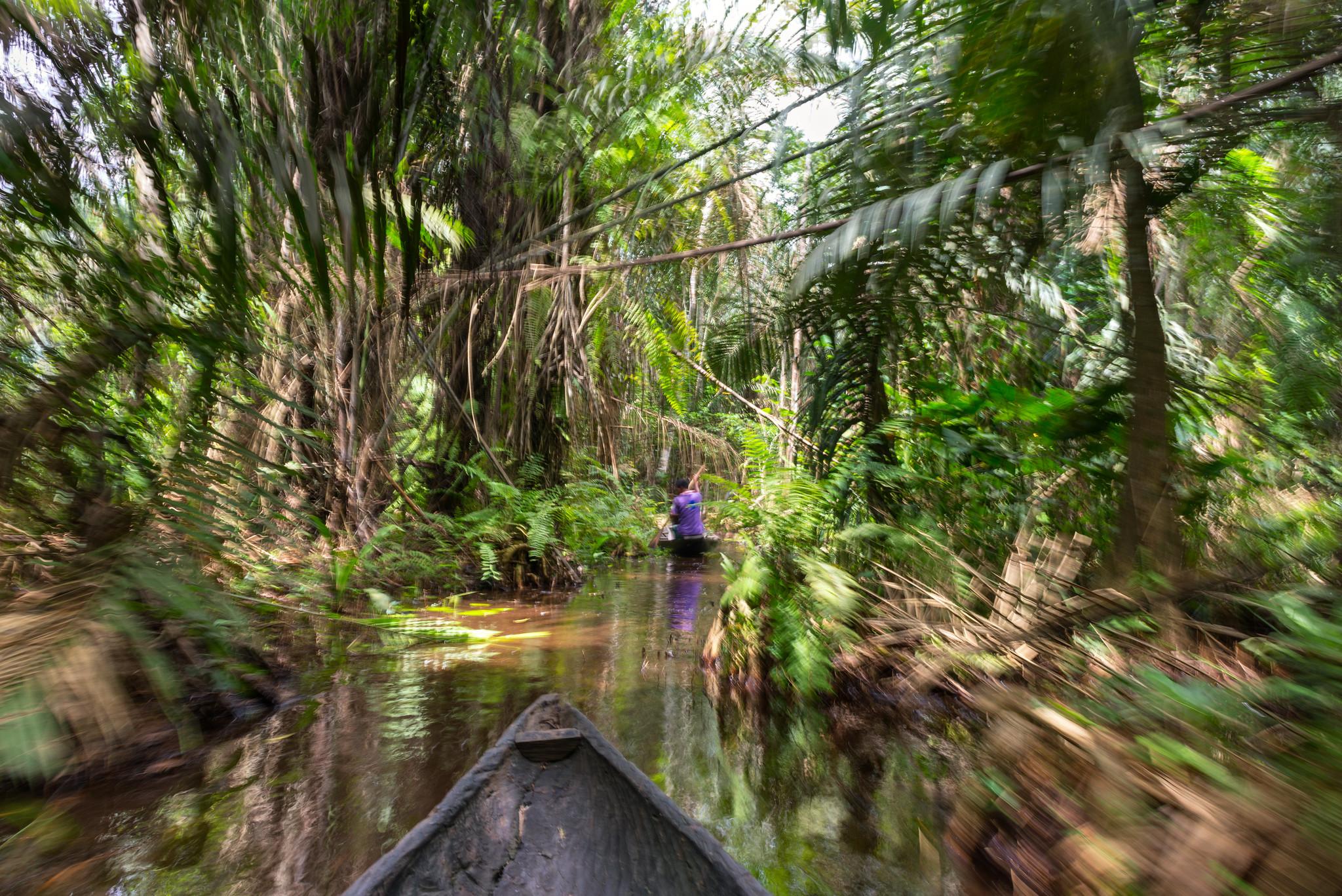 Lekki Jungle