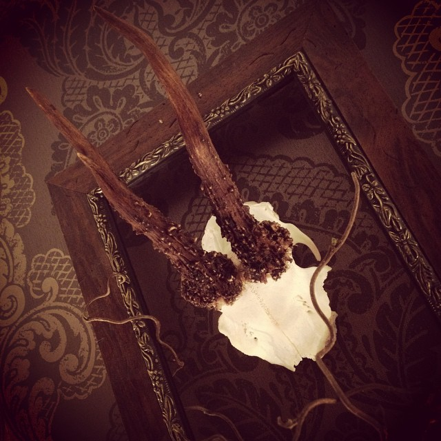 #antlers #assemblage