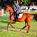 Equitación by PHOTOS | INSANE