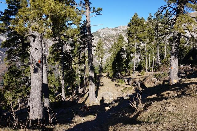 Cadi Moixero trails