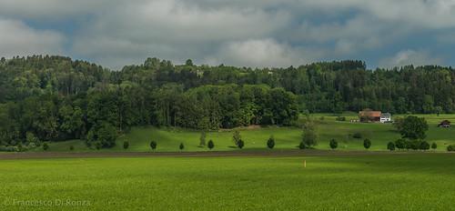 trees sky plant nature clouds landscape schweiz outdoor sony natur pflanze himmel wolken ostschweiz gras tamron landschaft bäume ch sanktgallen imfreien züberwangen slta99v tamronsp2470mmf28diusd lightroomcc