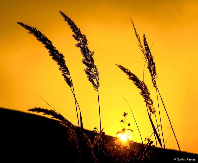 Fiery sunset ..