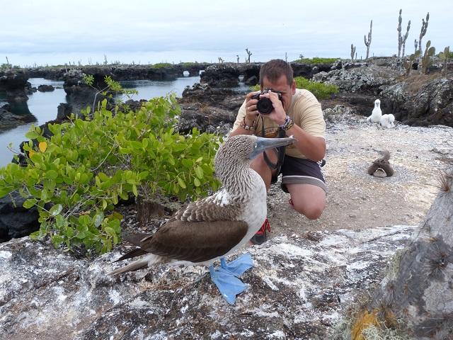 Fotografiando un piquero de patas azules en isla Isabela (Galápagos)