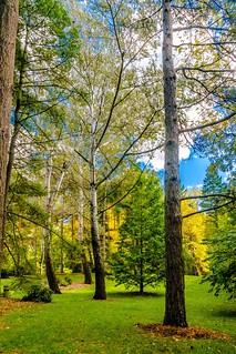into the woods, Midland, Michigan