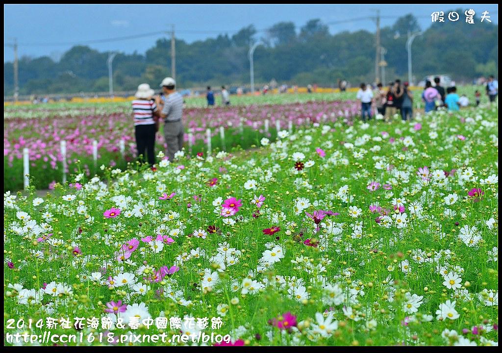 2014新社花海節&臺中國際花毯節DSC_4922