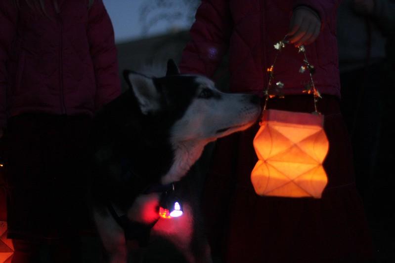 Paw Paw aka - Daddy's lantern