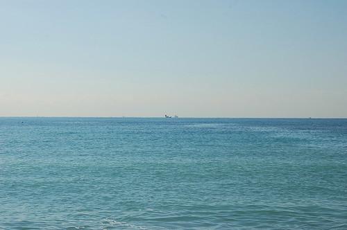 ★海と水仙★房総から・・・