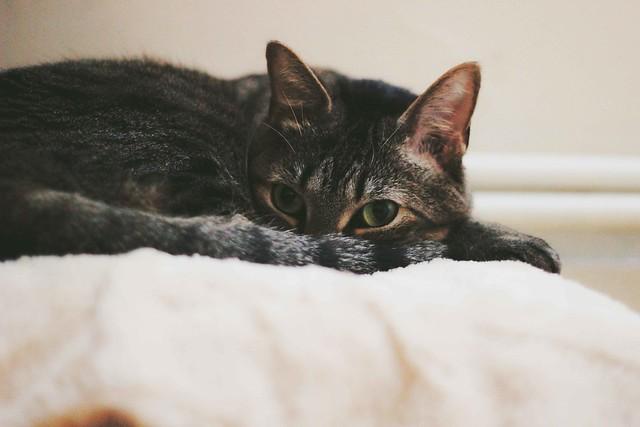 Sleepy-cat-3