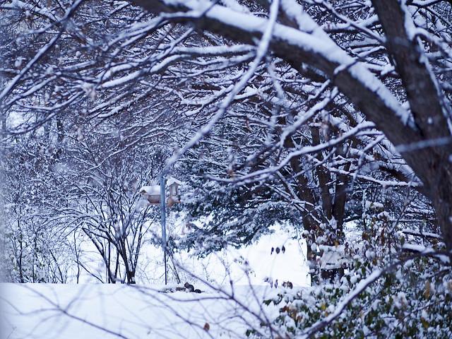 Winter2014-6