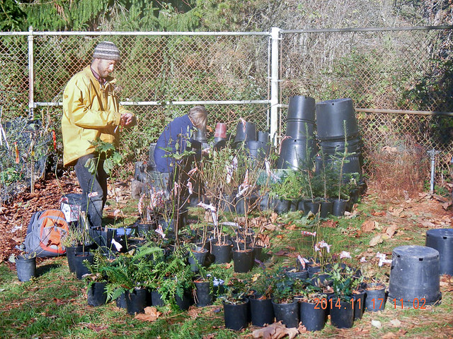 Tad (left) and Drexie (center background) tagging plants