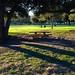 Small photo of Arcadia County Park