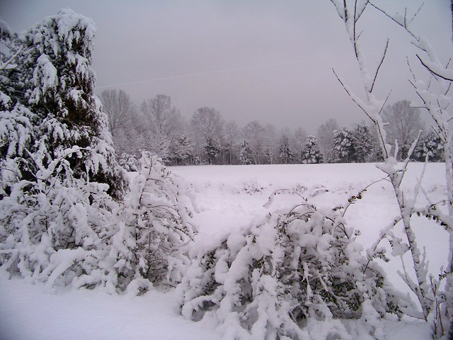 The atmosphere adds to the beauty of snow scene.