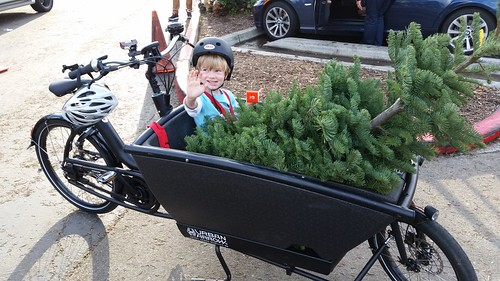 Christmas Tree by bike