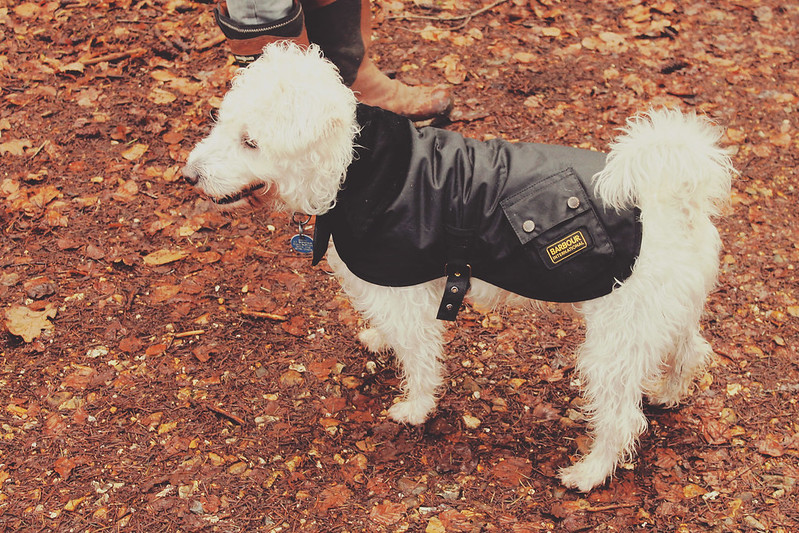 Barbour jacket for dogs