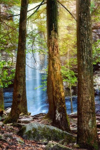 trees nature fairytale landscape waterfall nikon d810