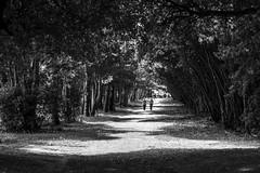 Dappled Stroll