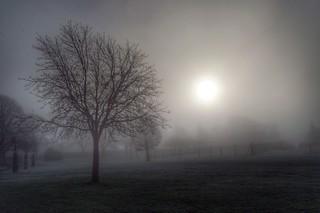 Fogged morning