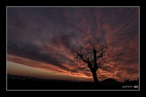 life blue light sunset red sun tree silhouette clouds canon landscape evening cooper 7d l usm ef f4 1740 lonelytree mkii markii garycooper brane llens alamond zalar