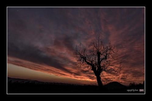 life blue light sunset red sun tree silhouette clouds canon landscape evening cooper 7d l usm ef f4 1740 lonelytree mkii markii garycooper brane llens alamond zalar