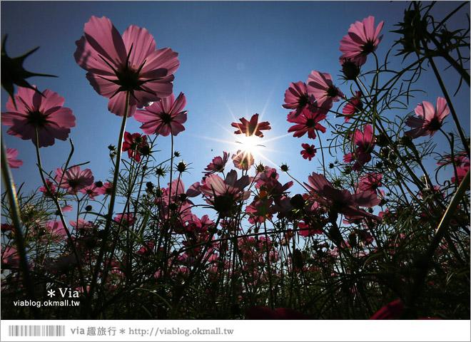 【南新彩繪村】彰化埔鹽/南新立體彩繪村~隱藏版的花海圍繞整村,美景如畫!35