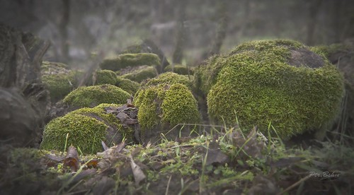 nature landscape reserve contemplation