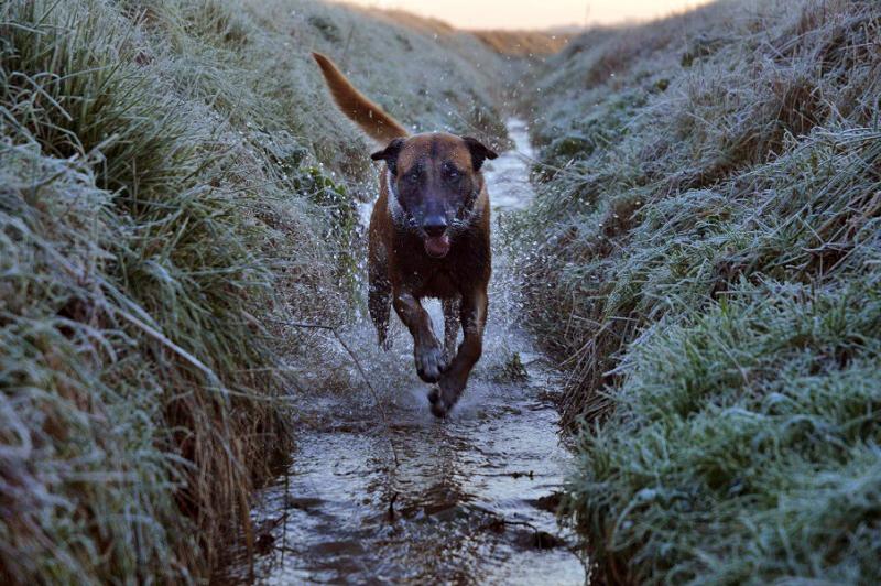 Photographie d'animaux - conseils pour devenir un pro ! - Page 6 16214371785_00cc552ce7_c