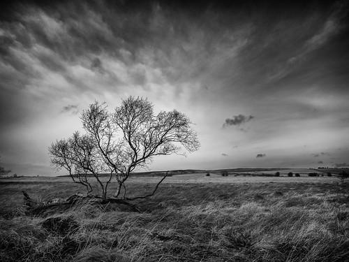 winter monochrome clouds landscape blackwhite derbyshire peakdistrict bleak moors explored beeleymoor 12012015