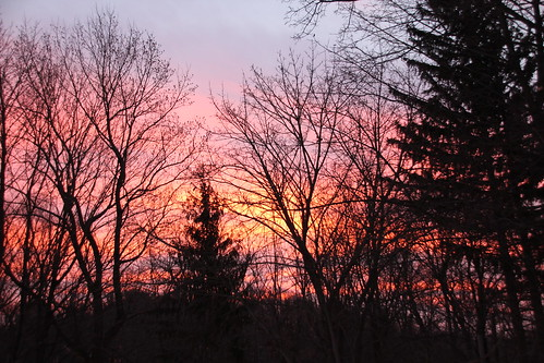 morning blue trees red sky orange silhouette sunrise branches chilly