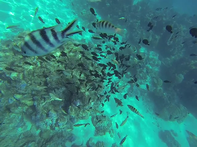 Moray Eel video in Bora Bora