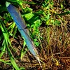 Bluejay feather or just blue feather? Found in my yard this morning. #nashvilleil #inmyyard #backyard #feather #feathers #bluejay #birds #southernil #soill #southernillinois