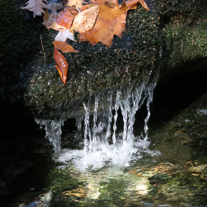 Mini waterfall on Race Brook