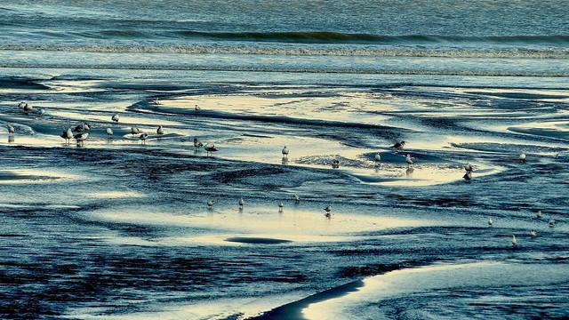 KerKaya - Seagull's walk