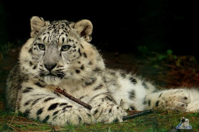 Tierpark Berlin 10.01.2014 127