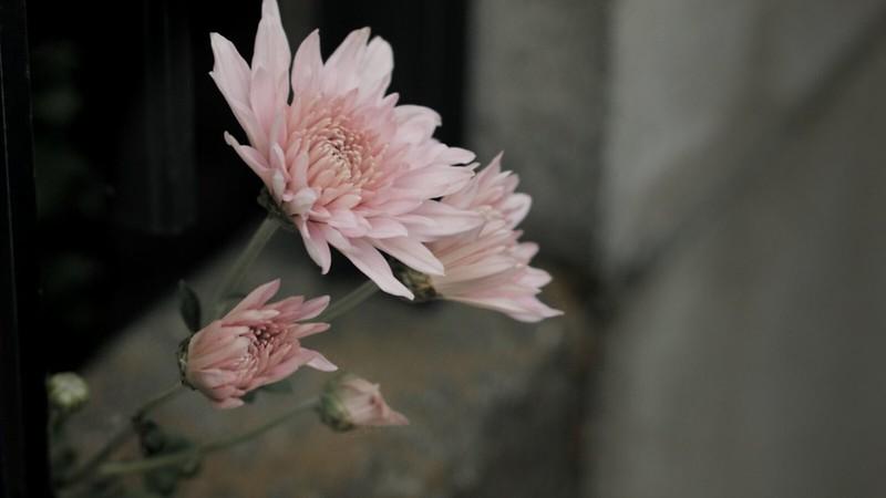 主題(花)を明るく鮮やかに。他を暗く彩度を落として