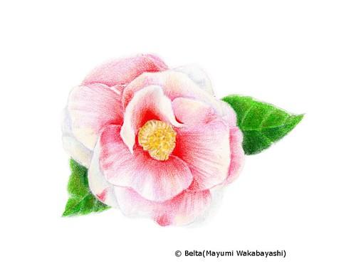 2015_01_22_camellia_01_s