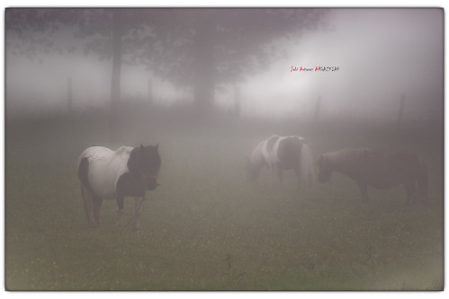 Un día de niebla cerrada que no se veía a dos palmos. Una atmósfera muy húmeda. Los tres ponnies disfrutaban del día porque los niños no estaban ese día para montarlos. ¡Qué paz para los ponnies!