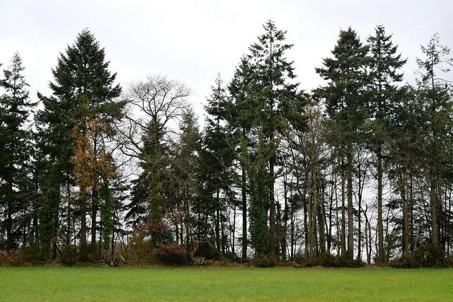 Brittany Tree Line | www.rachelphipps.com @rachelphipps