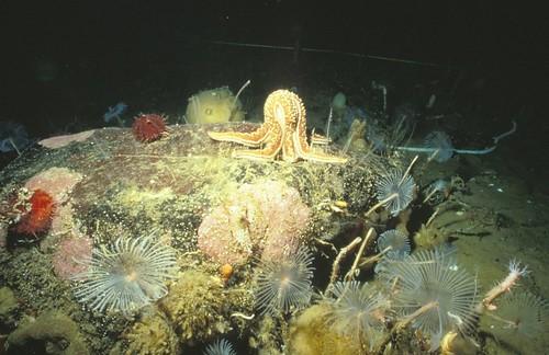 圖說:與一般看法相反,南極周圍的海洋底部充滿了生命。