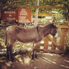 mare(0.0), animal(1.0), donkey(1.0), mule(1.0), pack animal(1.0), fauna(1.0),