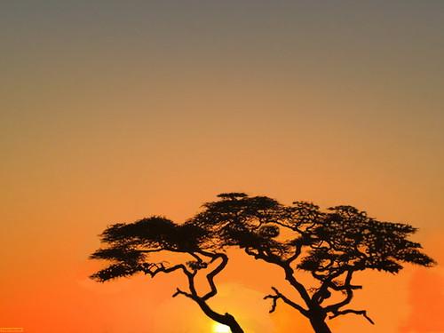 "africa sunrise nationalpark acacia namiibia namibnaukluftnp ""nikonflickraward"" hardapregion africasymbol helmeringhausenarea"